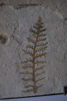 pflanze_01_05